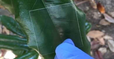 Researcher found new transparent meterial made from wood could use as smartphone screen